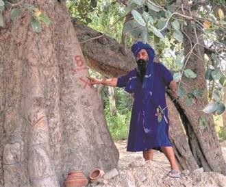 Improving air purity on their mind, Amritsar admn to prepare database of old trees