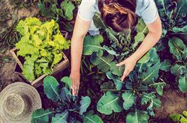 For a winter-ready kitchen garden