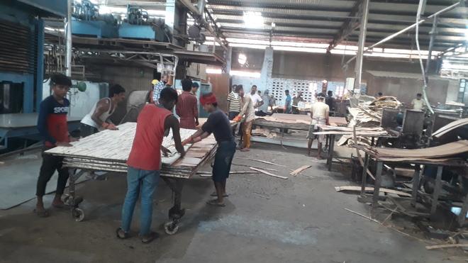 Yamunanagar plywood industry struggles hard for survival