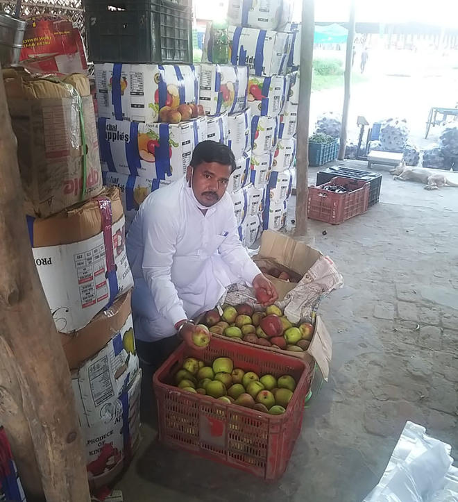 Apple supply to Punjab slumps as Himachal private firms procure crops