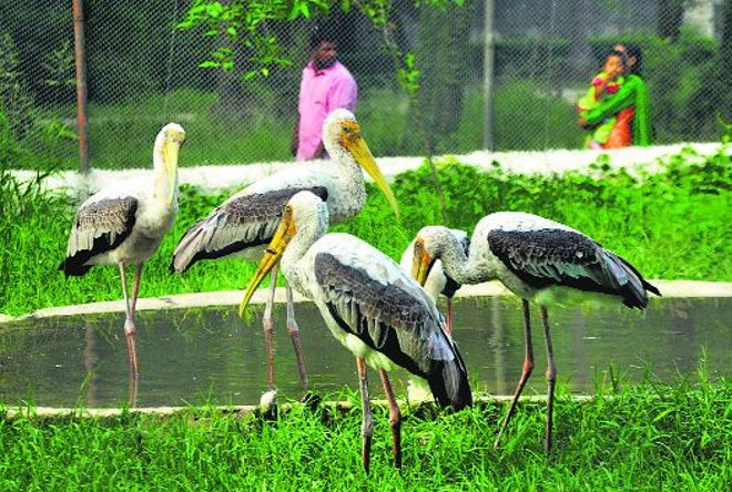 Chandigarh's aviary project gets Centre's nod
