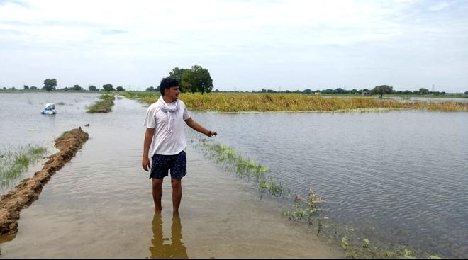 Waterlogging: Over 21K Haryana farmers seek crop loss relief