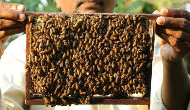 Bee research centre to be bee heritage farm