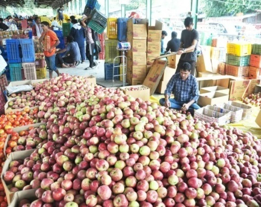 Himachal youths come to rescue of Kullu apple orchardists