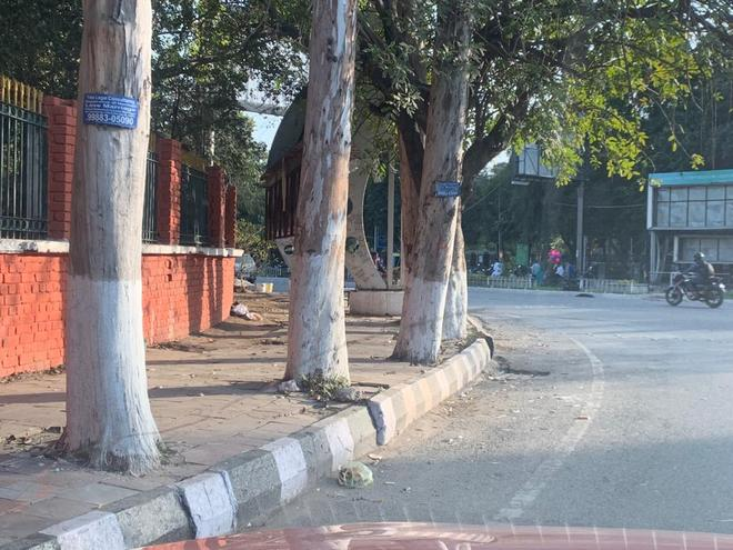 Ludhiana Municipal Corporation, LIT defy NGT order on concrete around trees: Council of Engineers
