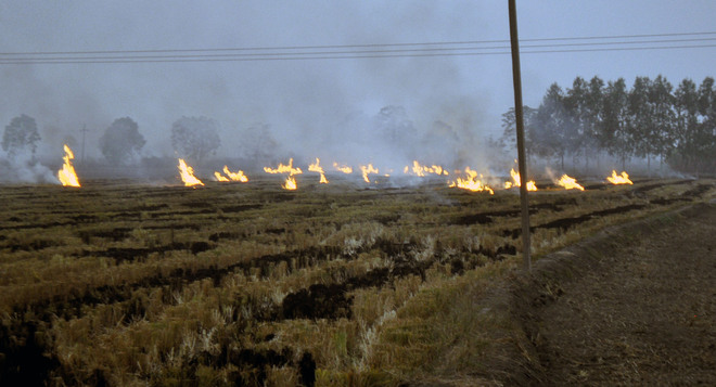 Rs 25-cr sop for industry to curb farm fires in Punjab