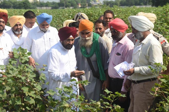 Cotton crop damaged, Punjab CM announces relief