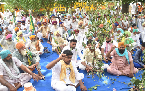 Bathinda: Cotton growers protest over pest attack