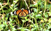 Survey on butterfly to study climate change