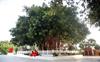 Old banyan tree at Jyotisar Tirtha to be Kurukshetra mascot