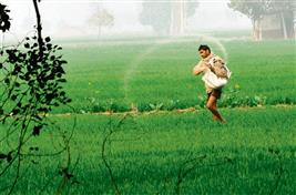 Cotton growers object to free pesticides in Punjab