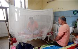 Dengue raising its head, tally reaches 31 in Jalandhar district