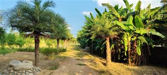 Garden with trees mentioned in Guru Granth Sahib opened in Moga
